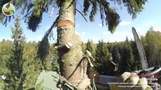 Спилить дерево около дома на даче(http://vovkarubit.ru/ Спилить дерево около дома на даче Удаление деревьев по частям., 2015-10-04T16:42:52.000Z)