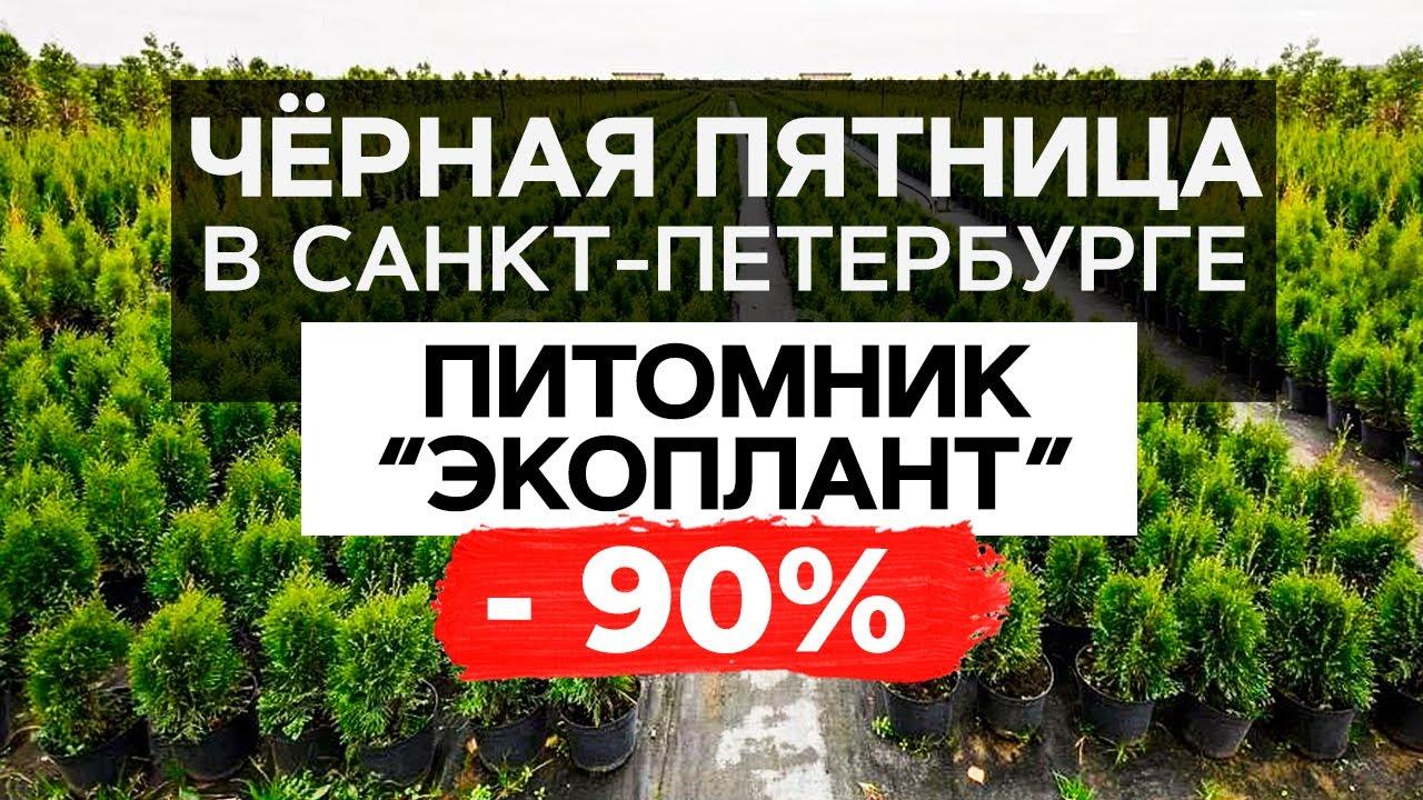 ЧЕРНАЯ ПЯТНИЦА В САНКТ-ПЕТЕРБУРГЕ! Питомник «Экоплант»! Скидки до 90% на все растения и деревья!