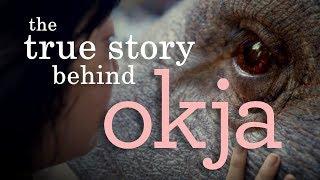 Okja | Understanding the (Im)Morality of Animal Consumption