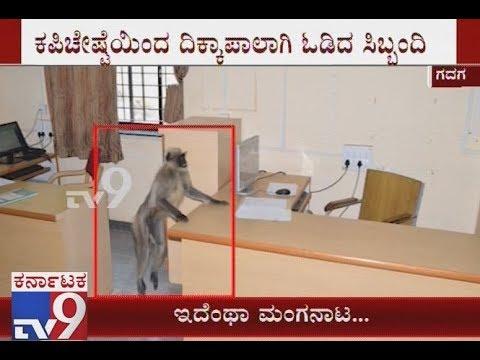 Monkey Created Tense Moment in Gadag Zilla Panchayat Office