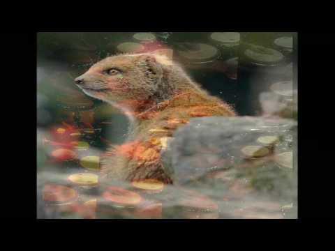 Elephant's Memory - Mongoose - [rare STEREO mix]
