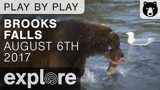 Brooks Falls 07 - Katmai National Park - August 6th, 2017 thumbnail