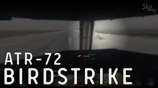 Столкновение с птицей ATR-72 | ATR-72 birdstrike