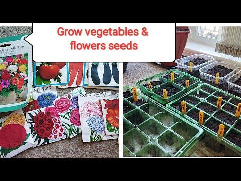 Grow seeds🌿 सब्जी और फूलो के बीज उगाये 🌿/Organic gardening landscape
