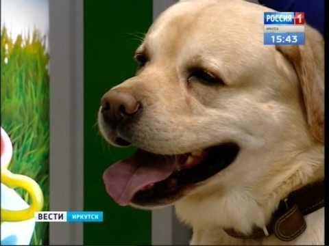 Перевозить домашних животных в России теперь можно без ветеринарной справки
