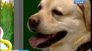 Перевозить домашних животных в России теперь можно без ветеринарной справки(, 2017-01-25T08:07:30.000Z)