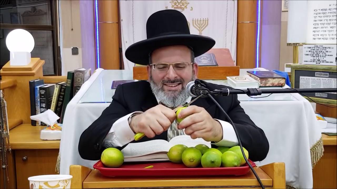 הרב יצחק לוי   רב העיר נשר   הפרשת תרומות ומעשרות   הלכה למעשה