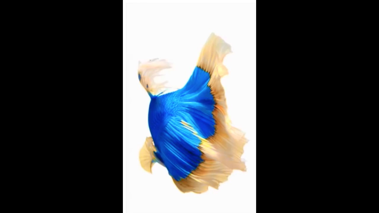 IOS 9.0 Live Wallpapers - YouTube