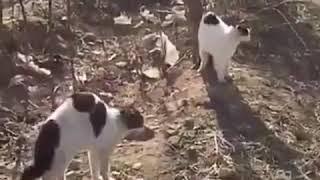Коты гопники)