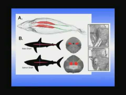 Sharks - Perspectives on Ocean Science