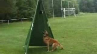 Dogtrophy Training Aid