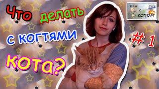 Что делать с когтями кота? -