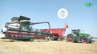ЭкоНива-Семена - селекционно-семеноводческое предприятие