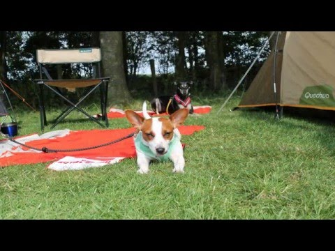 Jack Russell Terrier & Saluki Tired - The Lake District - Slideshow