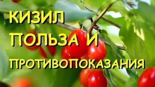 видео Рябина обыкновенная - полезные свойства, плоды, описание