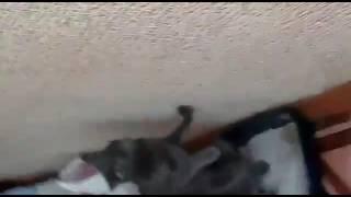 Кошка какает стоя
