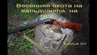 видео Тяга вальдшнепа, весенняя охота на вальдшнепа, вальдшнеп весной, высыпки