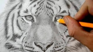 How to Draw a Tiger - Realistic Pencil Drawing