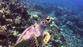 GoPro Hero3 & Sea Turtle
