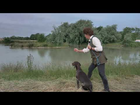 Water Training for German Shorthaired Pointer -  direction and split retrieves