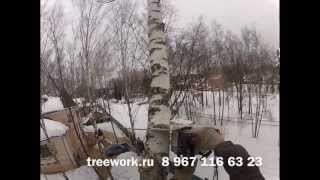 Удаление дерева.(Удаление небольшой больной березки. Простое удаление дерева, со сбросом частей. Удаление деревьев, обрезк..., 2013-03-24T14:30:58.000Z)