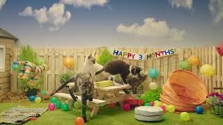 IAMS® Presents: Kittens celebrating a birthday