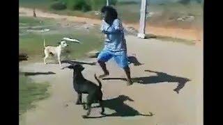 जानवर और इंसान की फनी लड़ाई   animals vs humans funny fights
