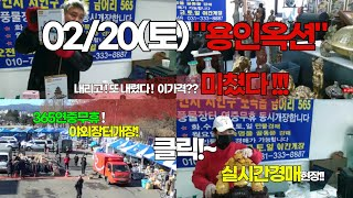 02/20(토) 용인옥션만물 실시간경매!  12시부터 …