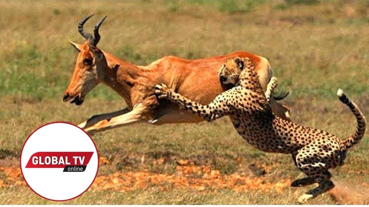 Download JIOONEE MAAJABU YA MAISHA YA WANYAMA PORINI TANZANIA