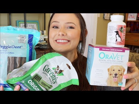 My Favorite Dental Products For Dogs & Cats