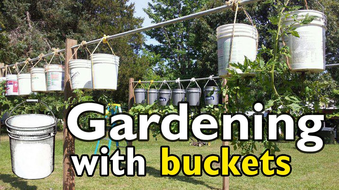 gardening with 5 gallon buckets - 5 Gallon Bucket Garden
