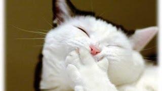 Прикольные и смешные коты и кошки ЧАСТЬ 4/ Funny cats part 4