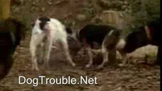 Dog Park Problems And Behavior Isuues Dogtrouble.net