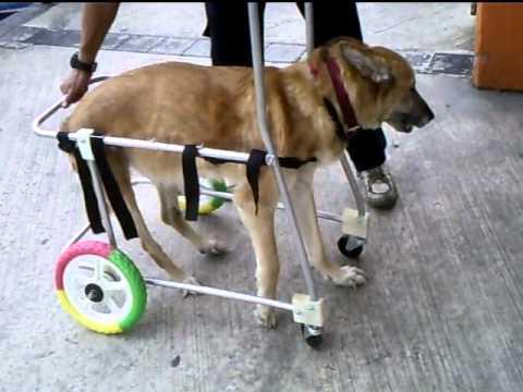 Video andadera de cuatro ruedas para yoko avi youtube for Sillas para discapacitados