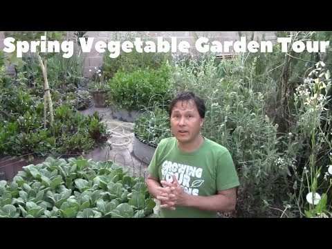 Abundant Spring Backyard Organic Vegetable Garden Tour