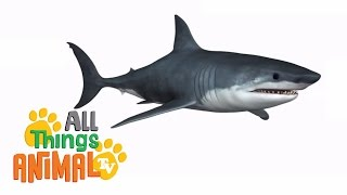 SHARKS: Animals for children. Kids videos. Kindergarten | Preschool learning