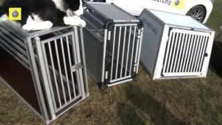 Test de caisses de transport pour chiens