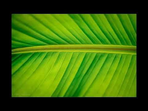 Végétal colors