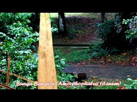 Travel Indonesia: Bogor Botanical Gardens. Botanical gardens that ............ Bogor, West Java