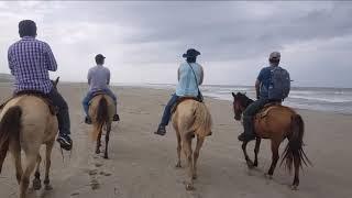 25-06-2019 -- HORSEBACK RIDING & BABY TURTLE RELEASE -- TourByVan Rudy Fregoso