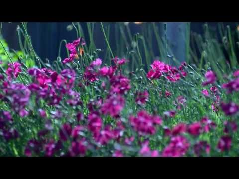 Jesu, Joy of Man's Desiring - All String Quartet - Wedding Sampler