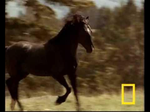 """Pony (It's OK)"" - Erin McCarley ~ KARAOKE/INSTRUMENTAL"