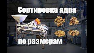 Как отсортировать ядро грецкого ореха по размерам? Обзор вибросита для сортировки ядра