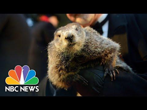 Watch Live: Punxsutawney Phil Gives His Groundhog Day Prediction | NBC News
