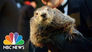 Watch Live: Punxsutawney Phil gives his Groundhog Day prediction thumbnail