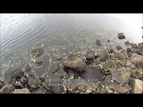 京浜運河でハゼ釣り調査 大井ふ頭中央海浜公園