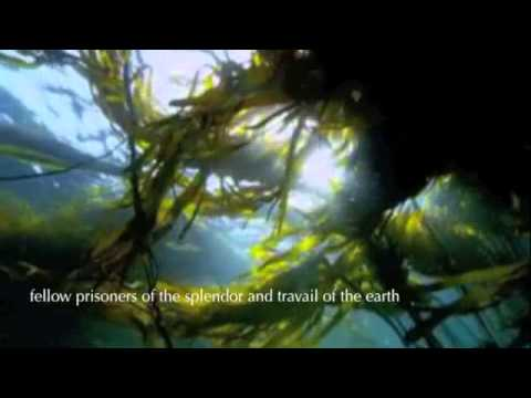 """ENSO NSO - [FR sub ENG] - Quote Henry Beston """" The Outermost House"""""""