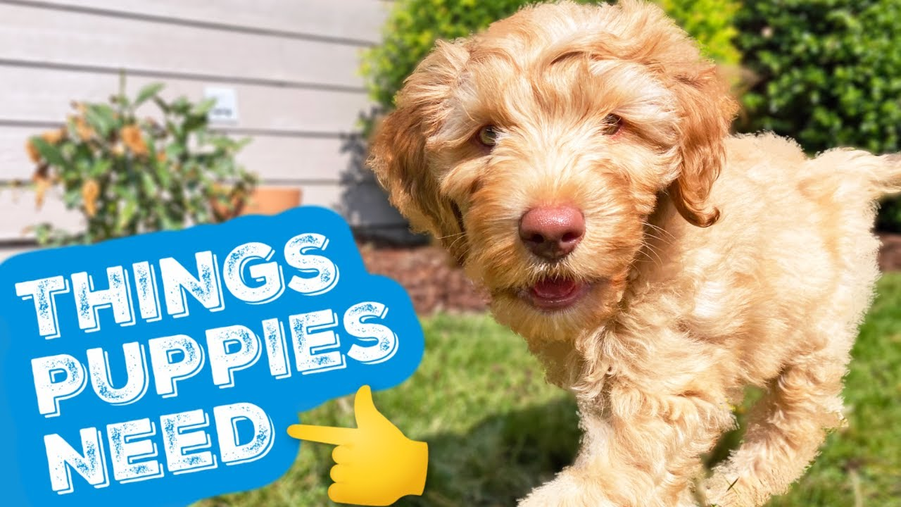 NEW PUPPY?👉 Do THESE 3 Things 🐶 Let's talk puppy food, pet insurance & training secret!
