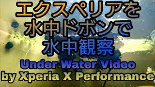 【ビオトープ#1】Experiaで水中撮影!Took a video under the water by Experia! thumbnail