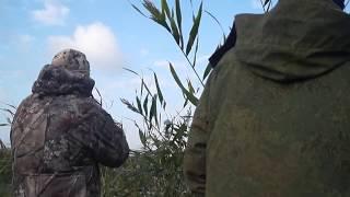 Охота на утку 2020 по перу
